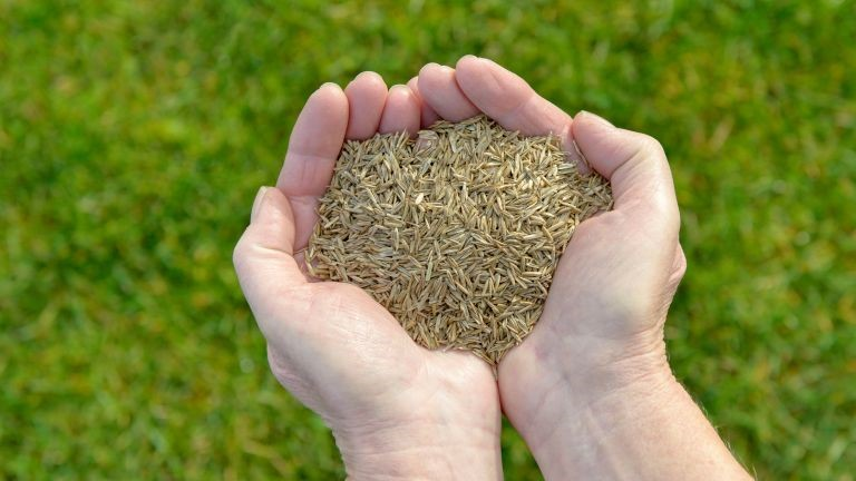 Where should you buy grass seeds?